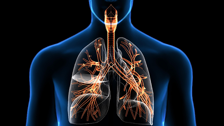image example of respiratory system